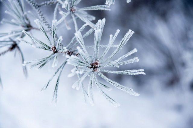 време, прогноза, сняг