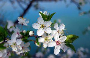 пролет, врме, прогноза