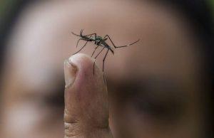 Лятото вече е тук, а с него задължително се появяват и комарите. Въпреки че повечето хора ги смятат за безобидни, само едно ухапване