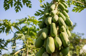 Още от най-малки ни учат, че плодовете и зеленчуците са полезни за нас. Ябълки, круши, сливи, краставици, домати, зеле - всички те прис