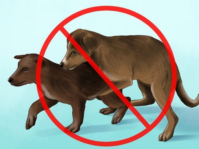 Dogs-Mating