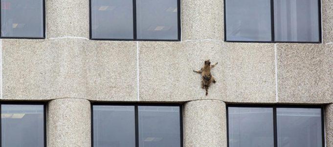 Raccoon-scales-