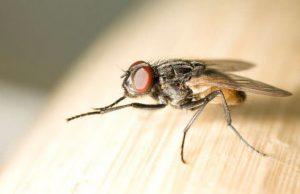 Всеки от нас се е сблъсквал с досадните мухи и насекоми през лятото.Освен, че не ни оставят да спим и ни създават дискомфорт, т