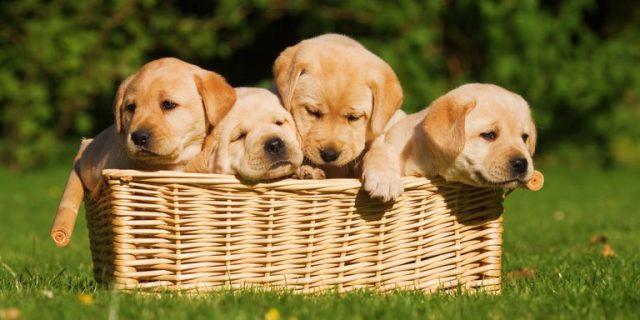 Най-странните кучешки закони по света