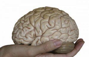 Японски учени установиха, че има плодове, чиято дневна консумация предпазва мозъка от нелечими болести, пише Zdrave.to.Изследва