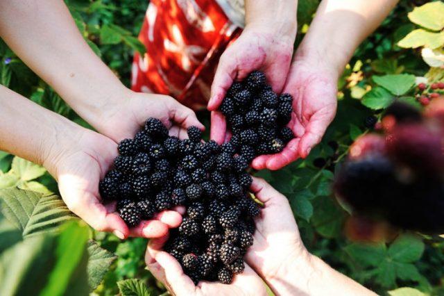 Хората обичат плодове. Особено ако са красиви на външен вид, а редом с това и вкусни. Едно плодове обаче със сладък и леко пикантен вкус са често пренебр