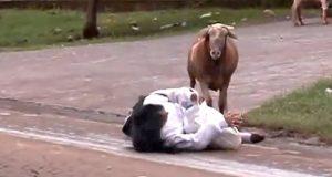 козите
