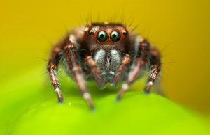 паяци