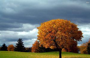време, прогноза, есен, слънце