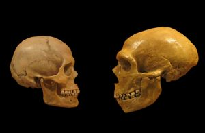 череп, неандерталец