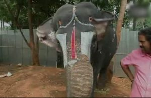 слоница, хармоника