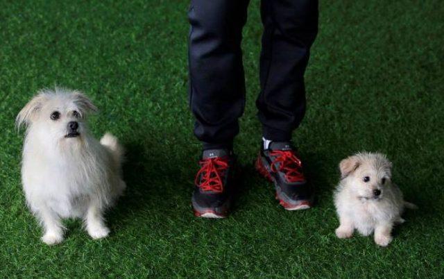 клонирани кучета