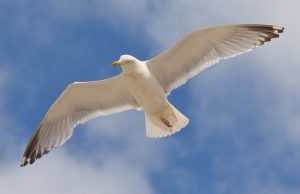 птица, полет