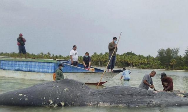 мъртъв кит, пластмаса
