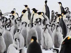 Императорски пингвини