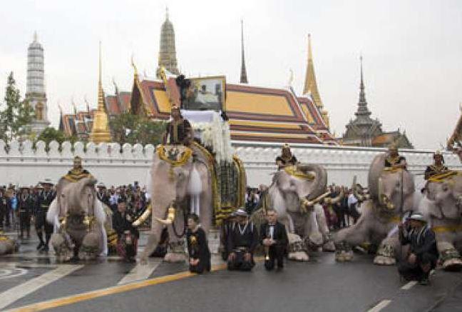 слонове, Тайланд