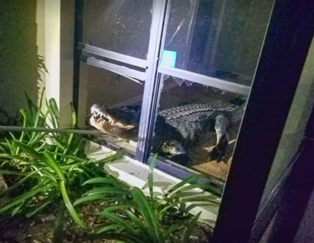 алигатор, къща