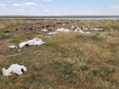11 000 птици убити от градушка