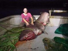 Петметрова акула шокира жителите на провинция Чанаккале