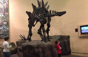 Откриха най-древния стегозавър