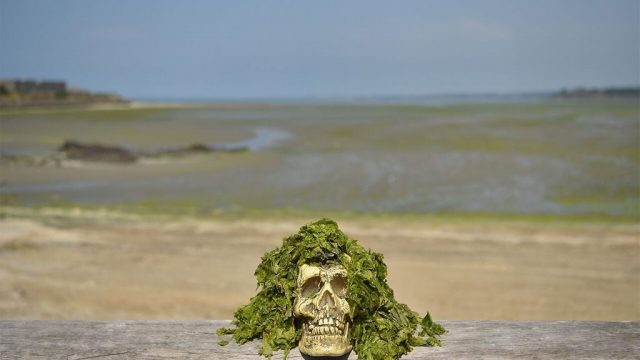 Смъртоносни зелени водорасли по френските плажове