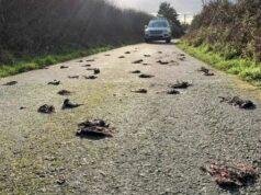 мъртви птици