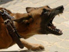 агресивно куче