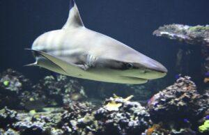 акулите навигация
